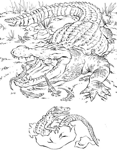 realistic coloring pages  animals coloring home