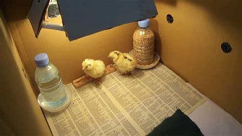 chicken coop ideas diy chicken brooder setup