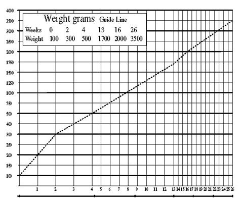 weight chart maine coon pinterest weights charts  weight charts