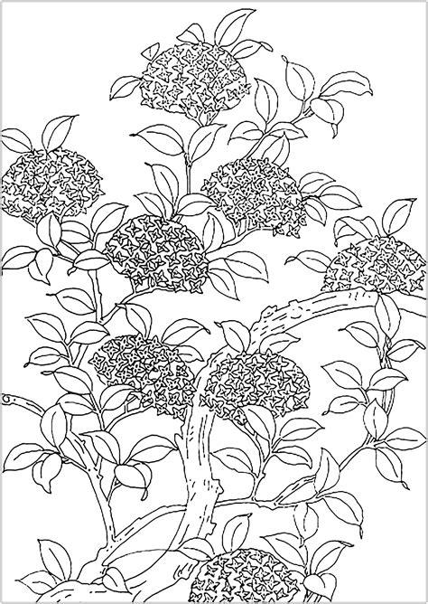 disegni da colorare fiori fiori e vegetazione 86147 fiori e vegetazione disegni