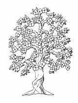 Tree Coloring Peach Pages Oak Trees Flower Inchworm Drawing Flowers Drawings Complicated Coloriage Symmetry Colouring Complex Arbre Monochrome Printable Dessin sketch template
