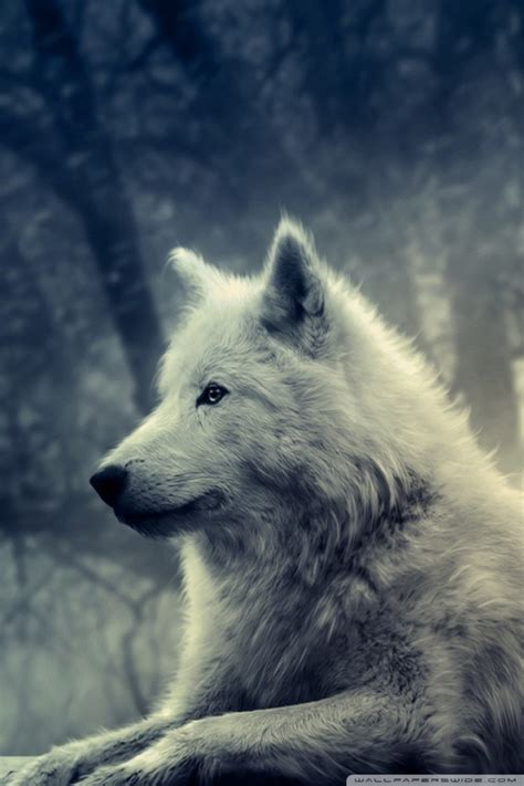 1080p Wolf Wallpaper Iphone X by White Wolf Painting 4k Hd Desktop Wallpaper For 4k Ultra
