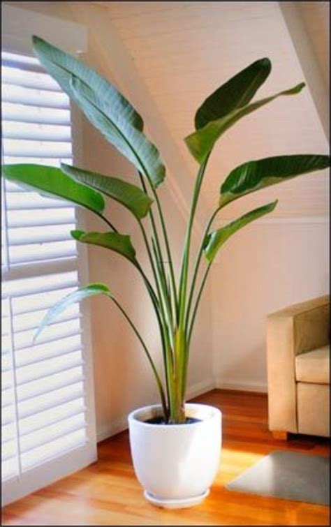 Low Light Indoor Trees by Best Indoor Palm Trees Indoor Plants Suitable For
