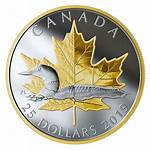 Loon Timeless Coin Gold Canadian Silver Oz