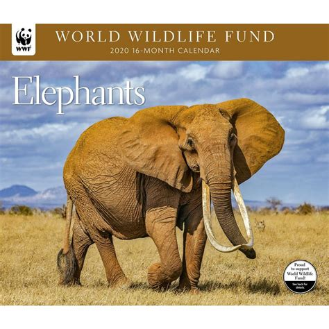 elephants wwf wall calendar
