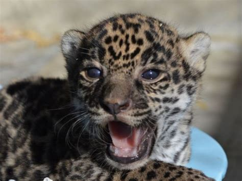Too Cute! Find Out How You Can Name The Living Desert's