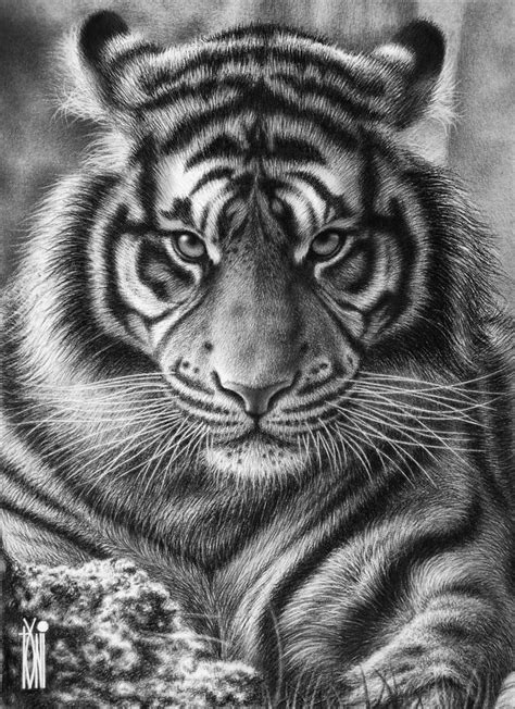 Dont bother me by toniart57 | Tiger tattoo design, Tiger