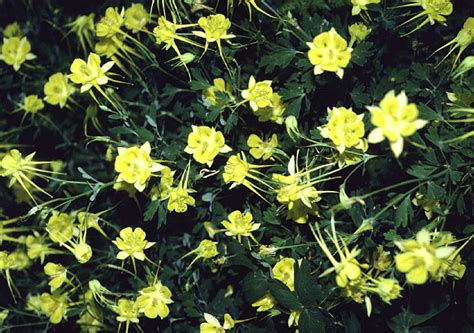 perennial flowers zone 5 perennial flowers zone 5 image search results