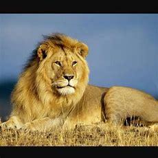 Schöne,süße Und Berührende Tier Bilder,videos&geschichten