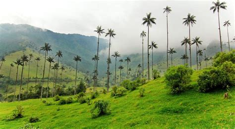 Hiking Valle de Cocora in Salento, Colombia: What NOT to Do