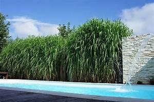 Welche Pflanzen Als Sichtschutz : cropped sichtschutz grashecke hoch bei ~ Markanthonyermac.com Haus und Dekorationen