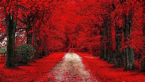 Fall, Leaves, On, Road, Between, Red, Cherry, Blossom, During