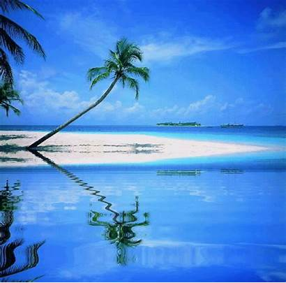 Tropical Palm Tree Water Reflection Reflections Trees