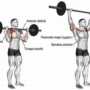 Understanding Muscle Anatomy Behind Each Workout  The