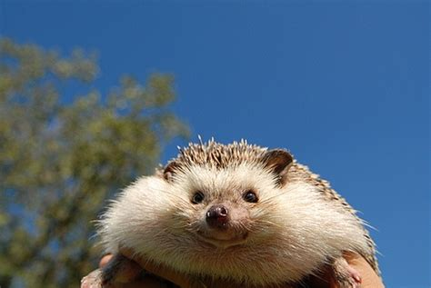That Is One Fat Hedgehog