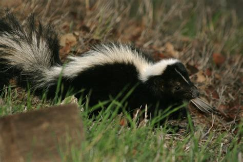 How To Keep Wildlife Out Of Your Yard Install It Direct