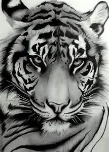 Tiger Tattoo Design Drawings