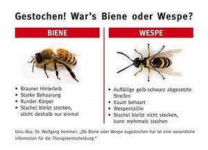 Bienen Und Wespen : presse ~ Whattoseeinmadrid.com Haus und Dekorationen