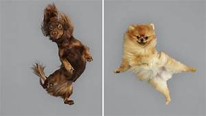 dogs take flight hilarious photos 1D