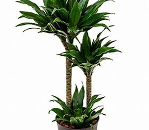 Hydrokultur Pflanzen Kaufen : hydrokultur pflanzen archive hydrokulturen begr nungen mietpflanzen b ropflanzen ~ Buech-reservation.com Haus und Dekorationen