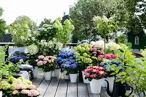 Wie Lange Blühen Hortensien : sch ner wohnen mit hortensie dekoration interieur interior ~ Frokenaadalensverden.com Haus und Dekorationen