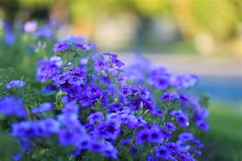 ดอกไม้ในสวนสวย