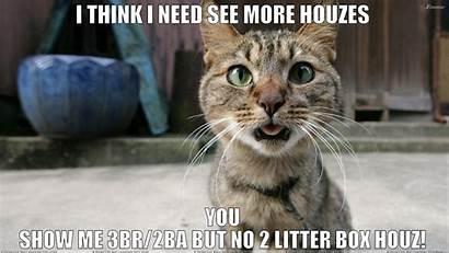 Meme Cat Grumpy Funny Background Humor Wallpapersafari