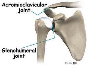 Shoulder Joint Bone Anatomy