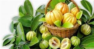 Garcinia Cambogia And Its Many  Powerful Health Benefits