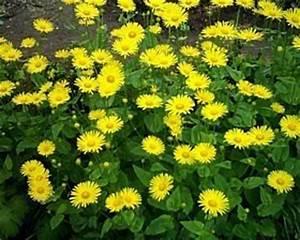 Gelbe Winterharte Pflanzen : gestaltung des grabes praktische hinweise zur bepflanzung ~ Markanthonyermac.com Haus und Dekorationen
