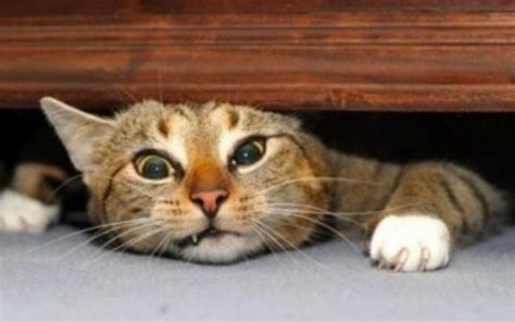 how to de stress you cat is your pet stressed here are some signs of stress in your cat and walking pet