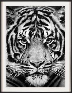 Tiger Schwarz Weiß : robert longo print untitled tiger ~ Watch28wear.com Haus und Dekorationen