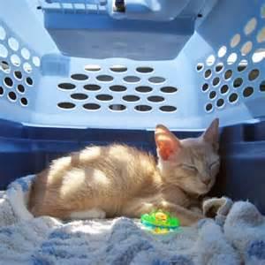 cat crate cat crate catster