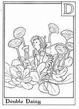 Coloring Fairy Fairies Flower Printable Alphabet Sheets Adult Flowers Colouring Daisy Letter Barker Mary Cicely Nature Double Adults Amber Fantasy sketch template