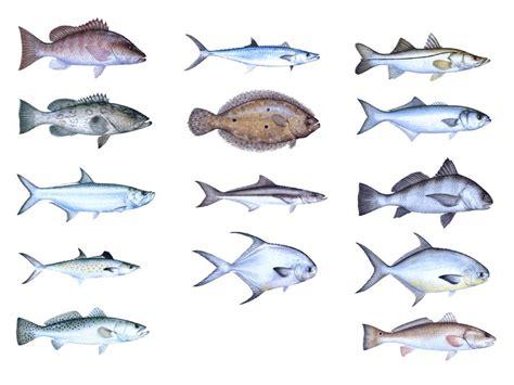 underwater species  indian river lagoon