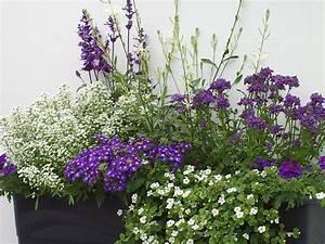 balkon gestaltung mit weissen und blaun pflanzen With katzennetz balkon mit bosch home garden