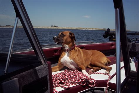 dog love boating pictures  dogs  boats