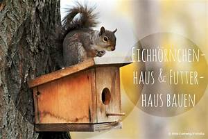 Hängeschrank Aufhängen Anleitung : eichh rnchenhaus futterhaus bauen und richtig aufh ngen anleitung ~ Orissabook.com Haus und Dekorationen