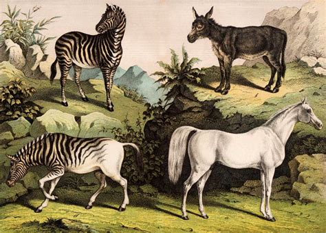 extinct horse breeds horses wild recently equines