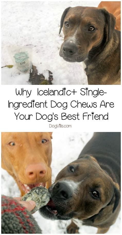 icelandic single ingredient dog chews   dogs