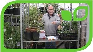 Beste Zeit Zum Tomaten Pflanzen : wann ist die beste zeit um erdbeeren zu pflanzen youtube ~ Lizthompson.info Haus und Dekorationen