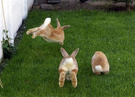 hopping bunny the bunny hop