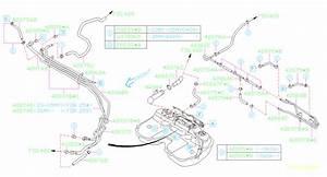 Subaru Forester Evaporative Emissions System Lines  Hose