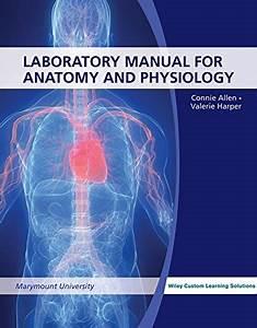 Laboratory Manual For Anatomy  U0026 Physiology