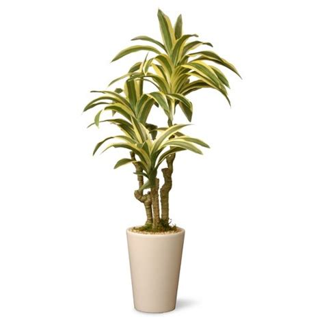 garden accents artificial dracaena plant green