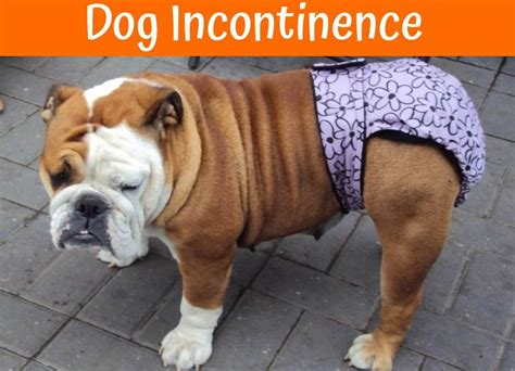 products  dog incontinence shoppers guide