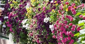 Hängende Pflanzen Aussen : balkonpflanzen pflanzen und pflegen mein sch ner garten ~ Sanjose-hotels-ca.com Haus und Dekorationen