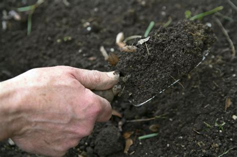 what is mulch made of what is soil made of and how does soil form