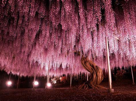 16 Wunderschöne Bäume, Wie Aus Einer Anderen Welt