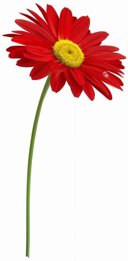 Stem Clipart Gerber Flowers Transparent Stems Geburtstag